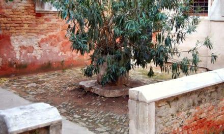 L'église disparue de Sant'Andrea della Certosa