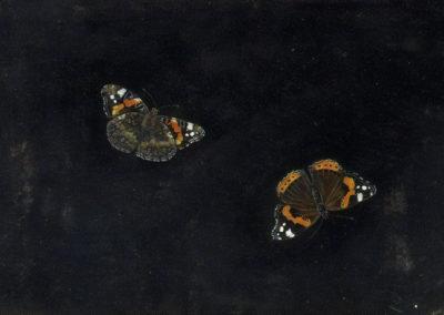 Deux papillons - Giovanna Garzoni (1650)
