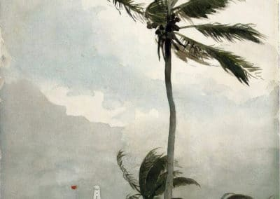Palm tree - Winslow Homer (1901)