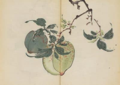 Shi zhu zhai zhai shu hua hua pu – Hu Zhengyan 1633 (59)