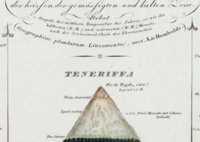 L'invention de la nature - Alexander von Humboldt 1830 (42)