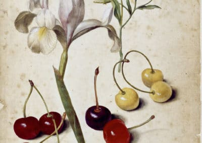 Spanish iris, morning glory and cherries - Georg Flegel (1630)