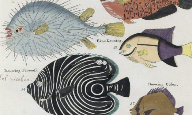 Poissons, écrevisses et crabes – Louis Renard