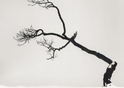 Hokkaido - Michael Kenna 2004 (23)