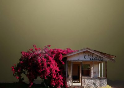 Desert realty - Ed Freeman (2007) - 2