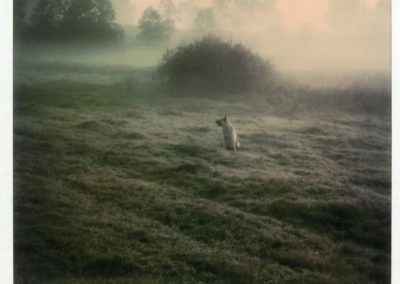 Mystery of everyday life - Andrei-Tarkovsky 1979 (5)