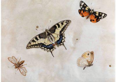 Papillons - Herman Henstenburgh (1683)