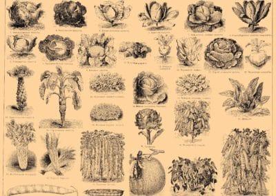 Encyclopédie Brockhaus et Efron 1890 (16)