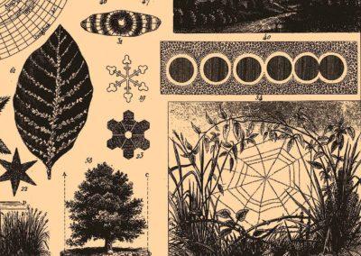 Encyclopédie Brockhaus et Efron 1890 (24)