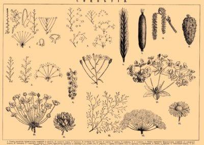 Encyclopédie Brockhaus et Efron 1890 (4)