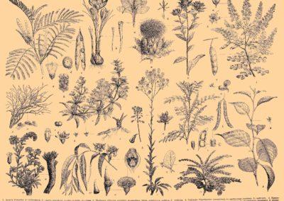 Encyclopédie Brockhaus et Efron 1890 (5)