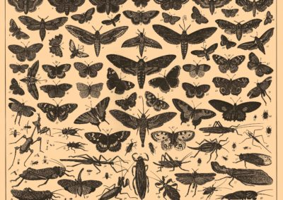 Encyclopédie Brockhaus et Efron 1890 (7)