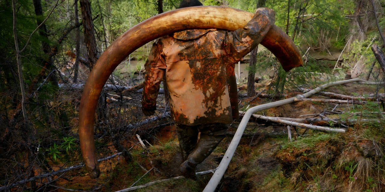 The mammoth pirates – Amos Chapple