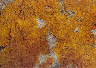 Fleurs de sel - Paul Morin 1977 (5)