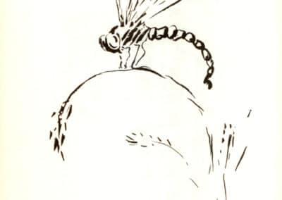 Histoires naturelles - Pierre Bonnard 1904 (9)