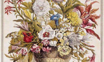 Douze mois de fleurs – Robert Furber