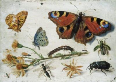 Etude d'insectes - Jan van Kessel l'ancien (1650)
