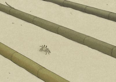 La tortue rouge - Michael Dudok de Wit 2016 (8)