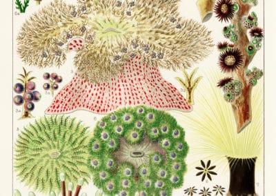La grande barrière de corail - William Saville-Kent 1893 (10)