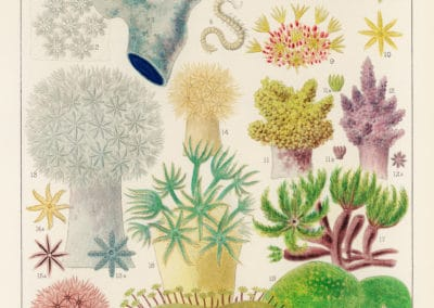 La grande barrière de corail - William Saville-Kent 1893 (16)