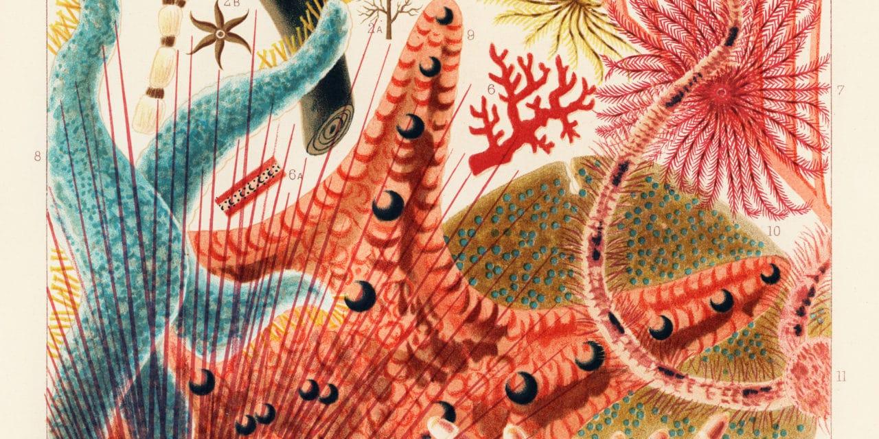 La grande barrière de corail – William Saville-Kent