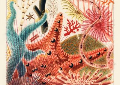 La grande barrière de corail - William Saville-Kent 1893 (17)