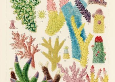 La grande barrière de corail - William Saville-Kent 1893 (2)