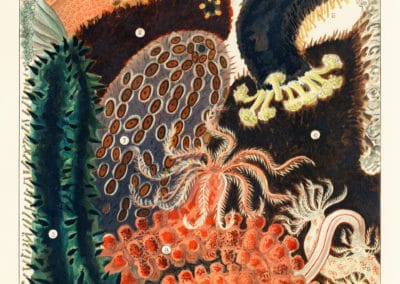 La grande barrière de corail - William Saville-Kent 1893 (4)