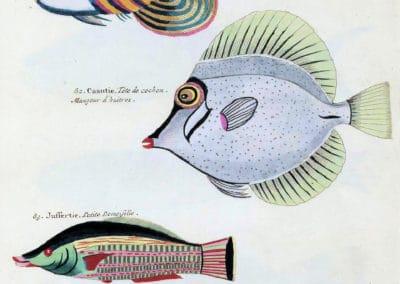 Poissons, écrevisses et crabes - Louis Renard 1719 (13)