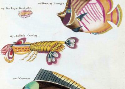 Poissons, écrevisses et crabes - Louis Renard 1719 (22)