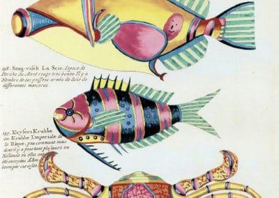 Poissons, écrevisses et crabes - Louis Renard 1719 (27)