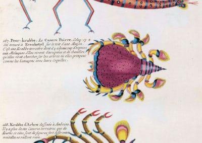 Poissons, écrevisses et crabes - Louis Renard 1719 (28)