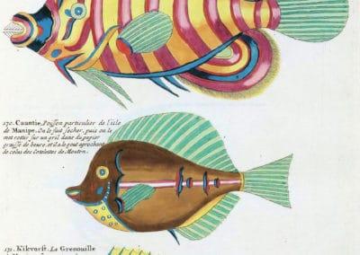 Poissons, écrevisses et crabes - Louis Renard 1719 (29)