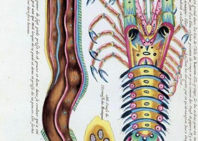Poissons, écrevisses et crabes - Louis Renard 1719 (30)