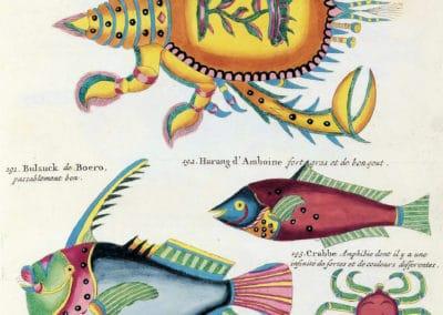 Poissons, écrevisses et crabes - Louis Renard 1719 (31)