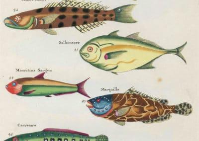 Poissons, écrevisses et crabes - Louis Renard 1719 (5)