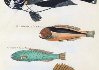 Poissons, écrevisses et crabes - Louis Renard 1719 (8)