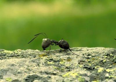 Minuscule, la vallée des fourmis perdues - Thomas Szabo 2013 (10)