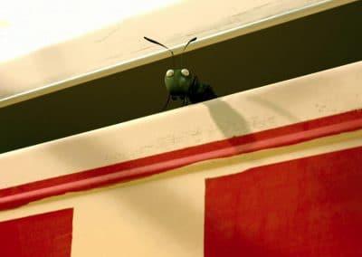 Minuscule, la vallée des fourmis perdues - Thomas Szabo 2013 (11)