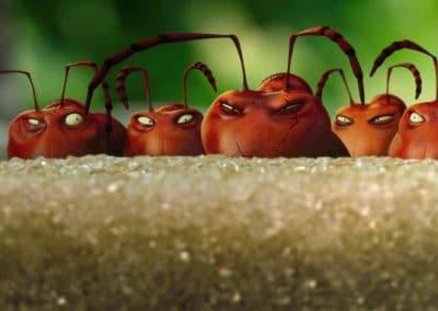 Minuscule, la vallée des fourmis perdues - Thomas Szabo 2013 (15)