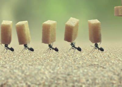 Minuscule, la vallée des fourmis perdues - Thomas Szabo 2013 (20)
