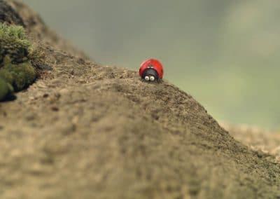 Minuscule, la vallée des fourmis perdues - Thomas Szabo 2013 (21)