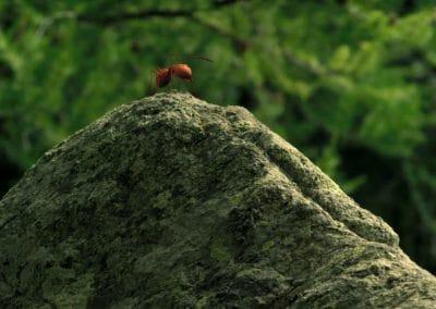 Minuscule, la vallée des fourmis perdues - Thomas Szabo 2013 (23)