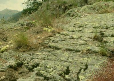 Minuscule, la vallée des fourmis perdues - Thomas Szabo 2013 (24)
