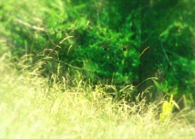 Minuscule, la vallée des fourmis perdues - Thomas Szabo 2013 (32)