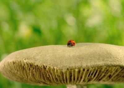 Minuscule, la vallée des fourmis perdues - Thomas Szabo 2013 (34)