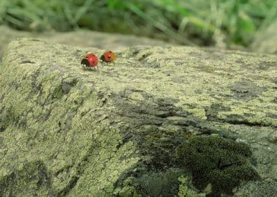 Minuscule, la vallée des fourmis perdues - Thomas Szabo 2013 (38)