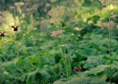 Minuscule, la vallée des fourmis perdues - Thomas Szabo 2013 (5)