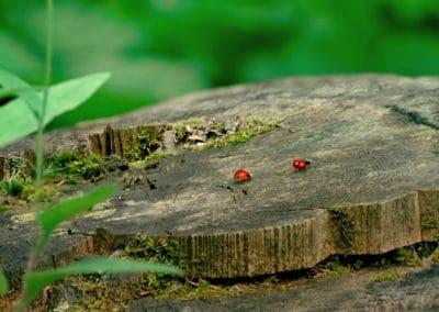 Minuscule, la vallée des fourmis perdues - Thomas Szabo 2013 (6)