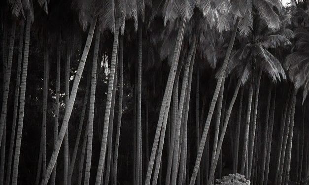 Noir – Hengki Koentjoro